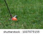 orange golf ball and putter on... | Shutterstock . vector #1037075155