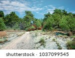 forest trail in the mountains... | Shutterstock . vector #1037099545