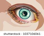 human eye close up | Shutterstock .eps vector #1037106061