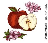 hand drawn apples and apple... | Shutterstock .eps vector #1037140837