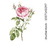 watercolor botanical rose and... | Shutterstock . vector #1037143297