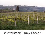 vineyard in tuscany  in the... | Shutterstock . vector #1037152357