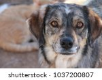close up of dog  | Shutterstock . vector #1037200807
