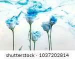 White Poses Inside In Water On...