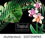 realistic detailed illustration ... | Shutterstock .eps vector #1037208985