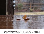 leaf on an icy porch with a... | Shutterstock . vector #1037227861