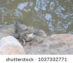 view of a large lizard on the... | Shutterstock . vector #1037332771