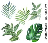 watercolor tropical leaves on... | Shutterstock . vector #1037365495