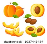 peach and slices of peaches.... | Shutterstock .eps vector #1037449489