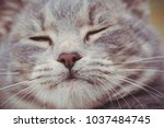 feline face   close up view | Shutterstock . vector #1037484745