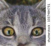 feline face   close up view | Shutterstock . vector #1037484751