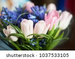 tulips and hyacinth flowers.... | Shutterstock . vector #1037533105