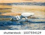 ardea feeding time   Shutterstock . vector #1037554129