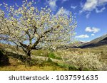 jerte valley sierra de gredos... | Shutterstock . vector #1037591635