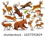 vector collection of wild... | Shutterstock .eps vector #1037592829