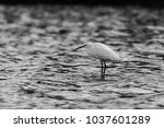 A Small Egret Standing Inside...
