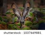owl in forest habitat  stone...   Shutterstock . vector #1037669881