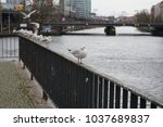 river gulls on the railing near ... | Shutterstock . vector #1037689837