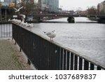 river gulls on the railing near ... | Shutterstock . vector #1037689837
