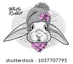 Stock vector vector white rabbit with grey knitted hat and pink scarf hand drawn illustration of dressed rabbit 1037707795