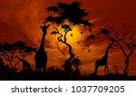 giraffes at sunset | Shutterstock . vector #1037709205