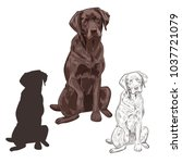 brown labrador dog sitting... | Shutterstock .eps vector #1037721079