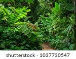tropical garden  queensland ... | Shutterstock . vector #1037730547