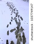 Traces Of Shoes On Snow During...