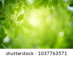 Stock photo closeup nature view of green leaf on blurred greenery background in garden with copy space using as 1037763571