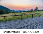 terrace on barley field in... | Shutterstock . vector #1037773525