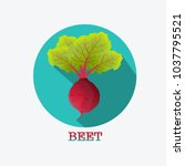 beet root. beets with a bundle... | Shutterstock .eps vector #1037795521