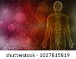 3d illustration human vertebral ... | Shutterstock . vector #1037815819