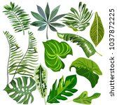 set of different tropical leaves | Shutterstock .eps vector #1037872225