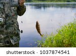 the fish caught on a feeder.... | Shutterstock . vector #1037874541
