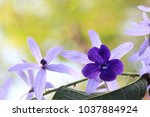 close up transparency purple... | Shutterstock . vector #1037884924
