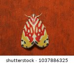 close up moth from nature  most ... | Shutterstock . vector #1037886325