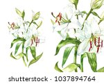watercolor set of white lilies  ... | Shutterstock . vector #1037894764