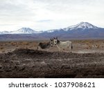 pair of curious donkeys... | Shutterstock . vector #1037908621