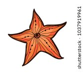 colorful starfish isolated on... | Shutterstock .eps vector #1037919961