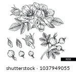 flower drawings. rose flowers... | Shutterstock .eps vector #1037949055
