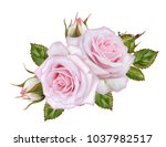 floral background.bouquet ... | Shutterstock . vector #1037982517