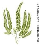 green watercolor fern leaves...   Shutterstock . vector #1037989117