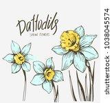 Daffodils. Spring Flowers....