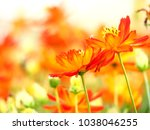closer two orange flower... | Shutterstock . vector #1038046255