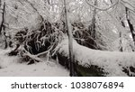 tree fallen under heavy snow | Shutterstock . vector #1038076894
