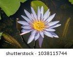 close up beautiful purple lotus ... | Shutterstock . vector #1038115744
