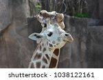 a couple of giraffes  giraffa...   Shutterstock . vector #1038122161