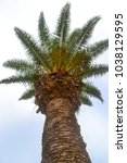 bottom view of the palm tree... | Shutterstock . vector #1038129595