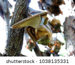 close up of a bat hanging down... | Shutterstock . vector #1038135331
