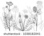 vectorhand drawn medical herbs  ... | Shutterstock .eps vector #1038182041